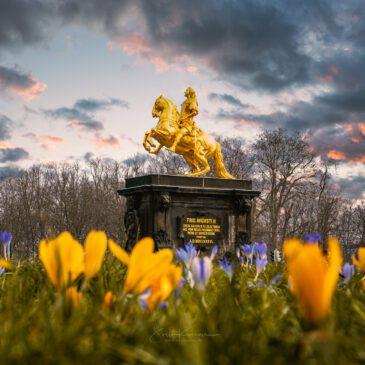 DRESDEN – Die Liebe meines Lebens